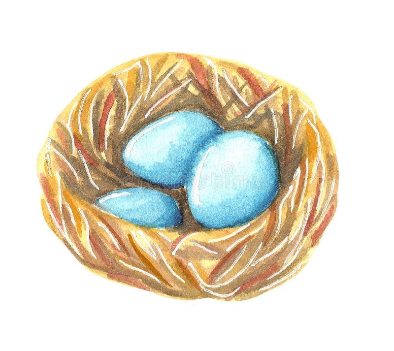 Gniazdeczko z turkusowego błękita jajkami dziki ptasi rudzik ilustracja wektor