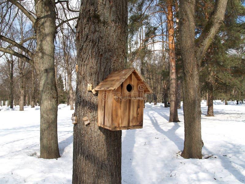 Gniazdować pudełko na drzewie w zima parku zdjęcia stock
