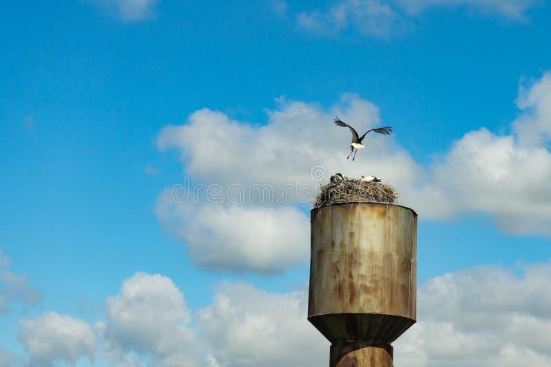 Gniazdowy bocian na starej wieży ciśnień z nieba obraz royalty free