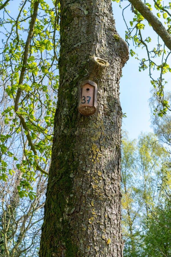 Gniazdowy pudełko, Birdbox/- dom dla ptasiego zwierzęcia Mały drewniany budynek na drzewie w zimie i jesieni zdjęcia stock