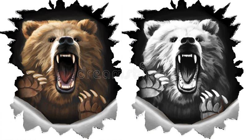 Gniewny krzyka niedźwiedź na białym tle Bestia pazury drzeje metal Dwa różnicy w kolorze i monochromu czarny i biały royalty ilustracja