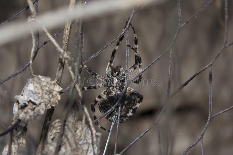 Gniewny pająk obraz royalty free