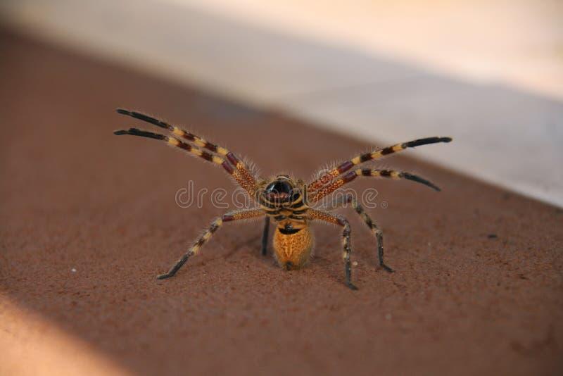 Gniewny pająk fotografia royalty free