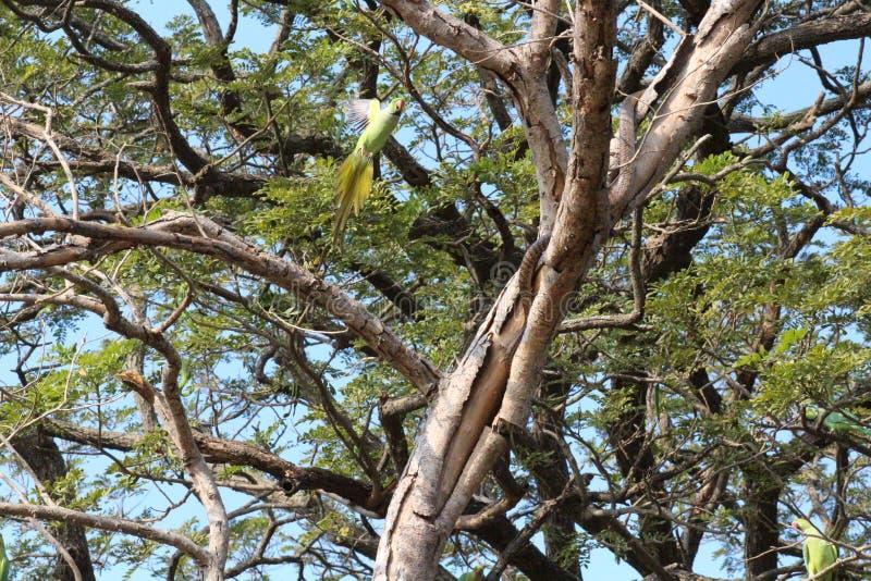 Gniewny Papuzi ataka wąż obrazy stock