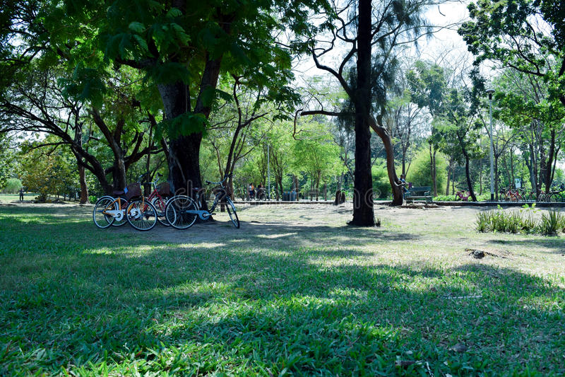 Gnilny Faja park zdjęcia royalty free