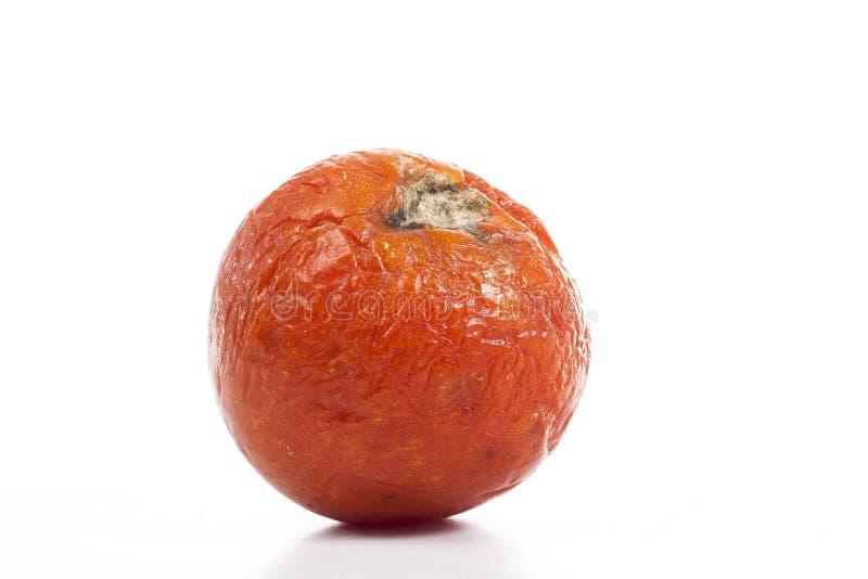 Gnilny przegniły marszczący suchy wysuszony stary pomidorowy warzywo Na odosobnionym białym pracownianym tle Ścinek ścieżka Przer zdjęcia royalty free