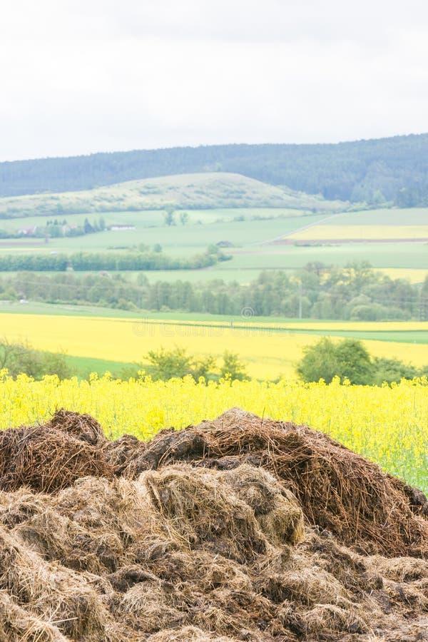 Gnoisko oprócz oilseed gwałta pola zdjęcia royalty free