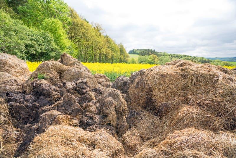Gnoisko oprócz oilseed gwałta pola obrazy stock