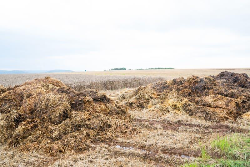 Gnoisko oprócz pszenicznego pola zdjęcie stock