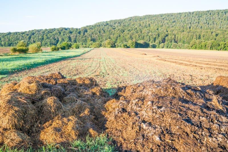 Gnoisko oprócz pszenicznego pola obraz stock