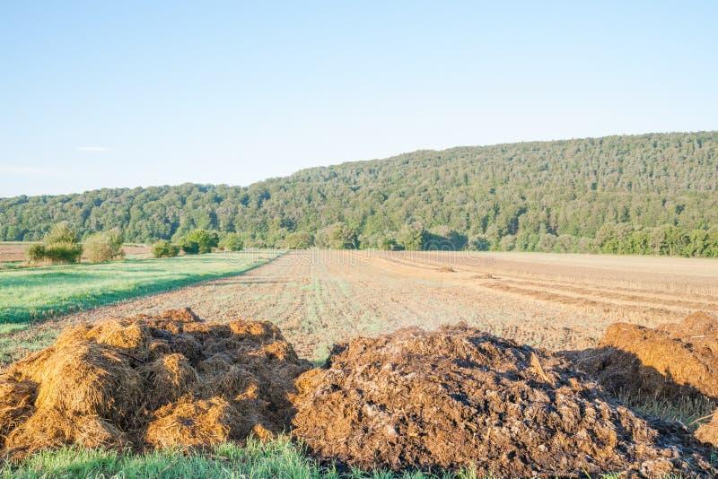 Gnoisko oprócz pszenicznego pola obrazy stock