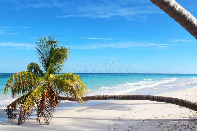 Gnuśna palma w raj plaży obraz stock