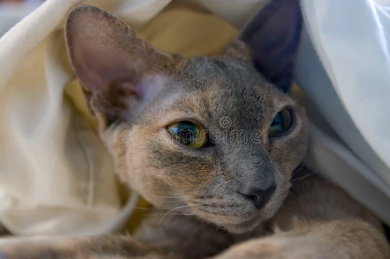 Gnuśny kot obrazy stock