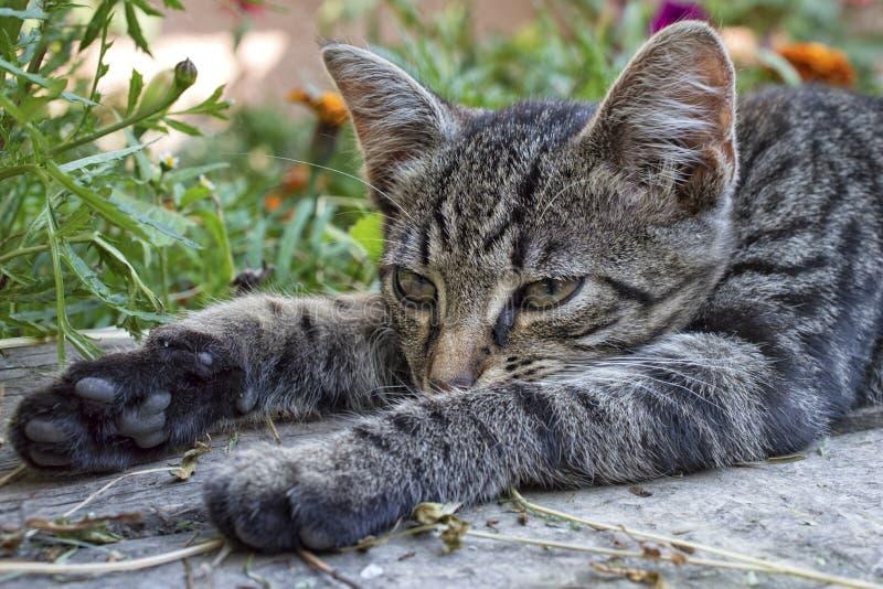 Gnuśny kot kłama na ławce obrazy royalty free