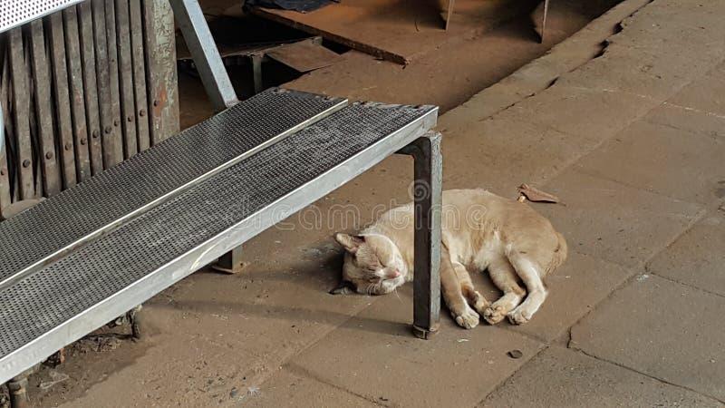 Gnuśny kota drzemanie pod ławką fotografia royalty free