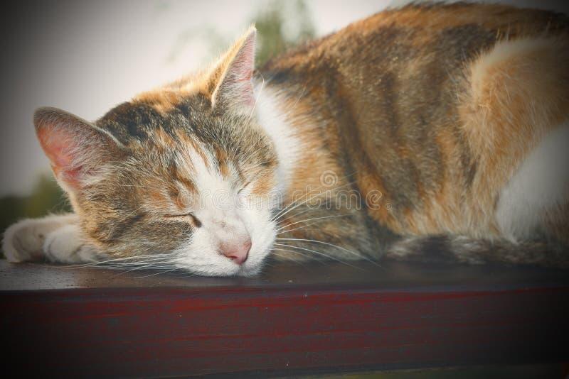 Gnuśny kota instagram skutek zdjęcie royalty free