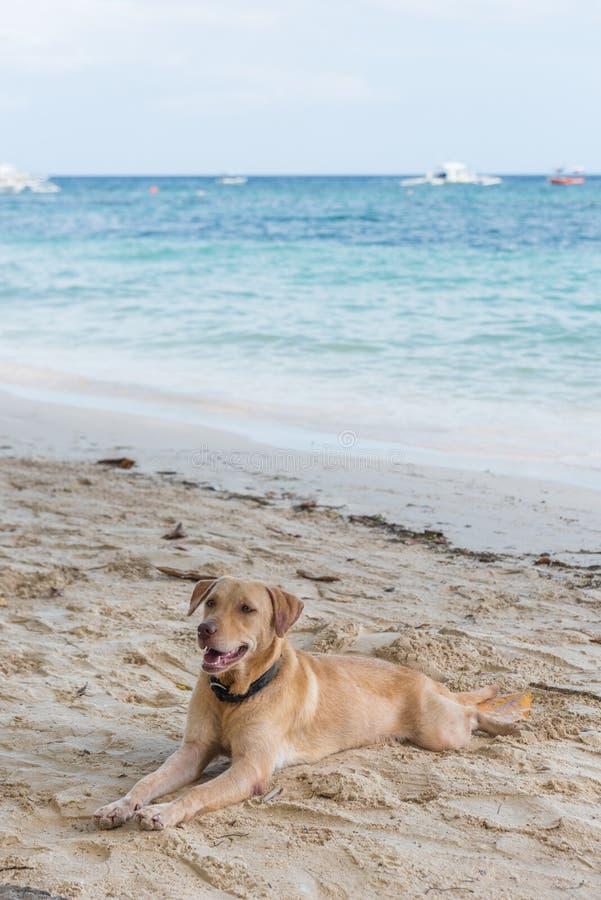 Gnuśny plaża pies obraz stock