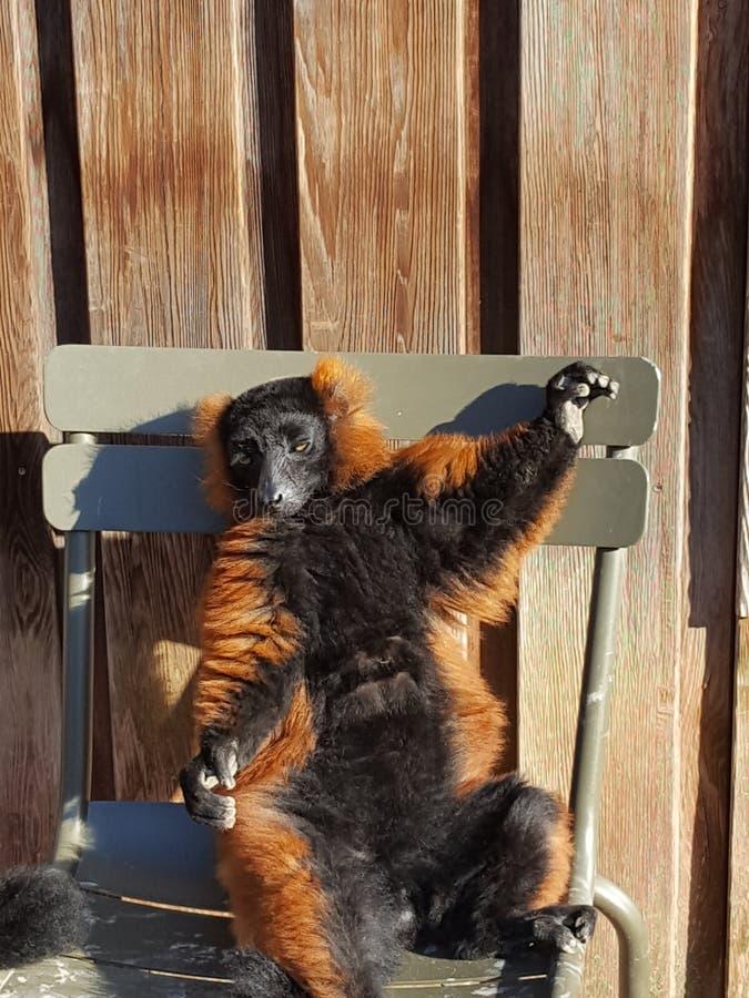 Gnuśny zwierzę fotografia stock