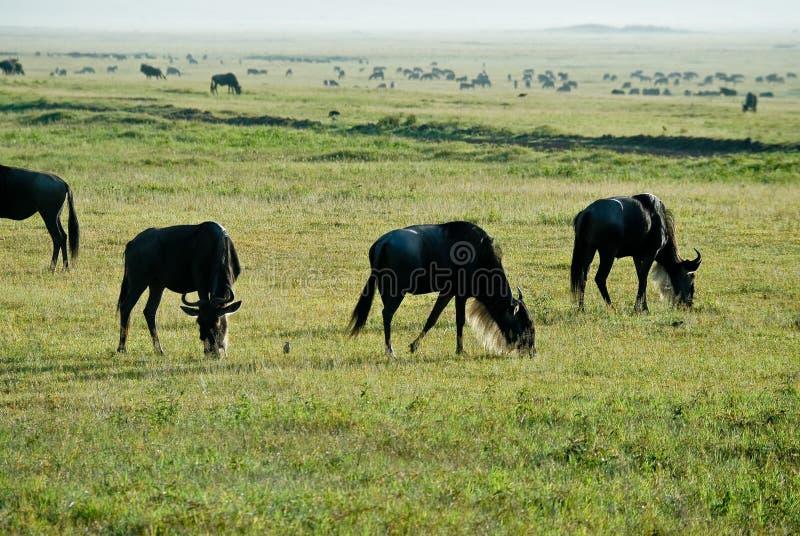 GNU royalty-vrije stock foto