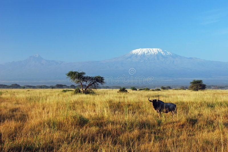 Gnu e Kilimanjaro imagens de stock royalty free