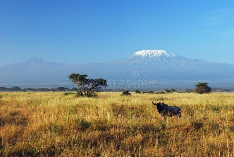Gnu y Kilimanjaro imágenes de archivo libres de regalías