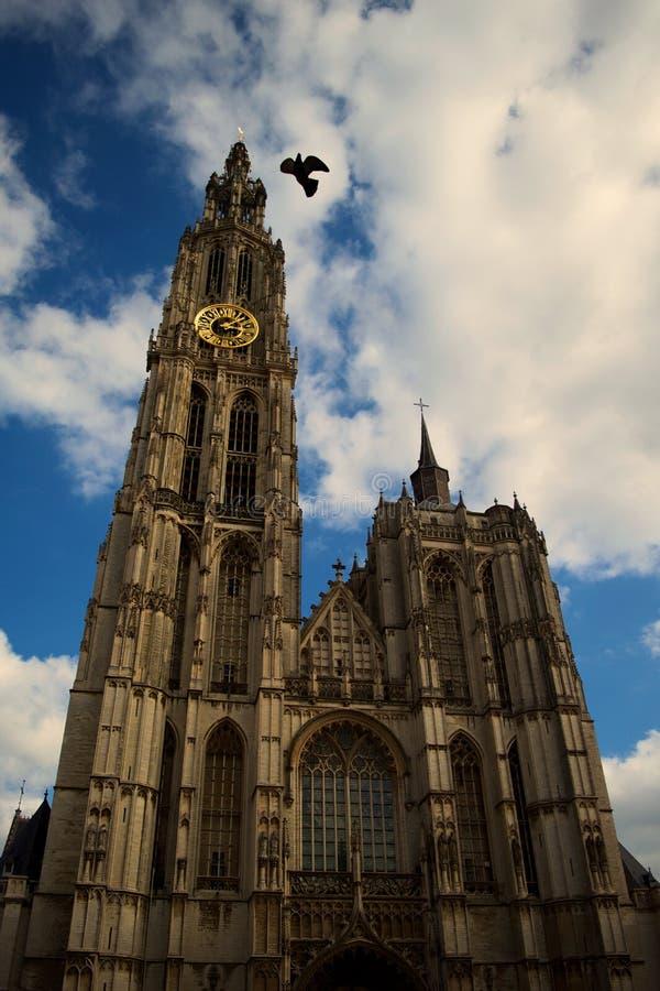 Gołąb & kościół w Antwerp zdjęcie stock