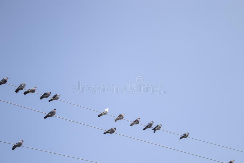 Gołębie siedzą na liniach energetycznych fotografia stock