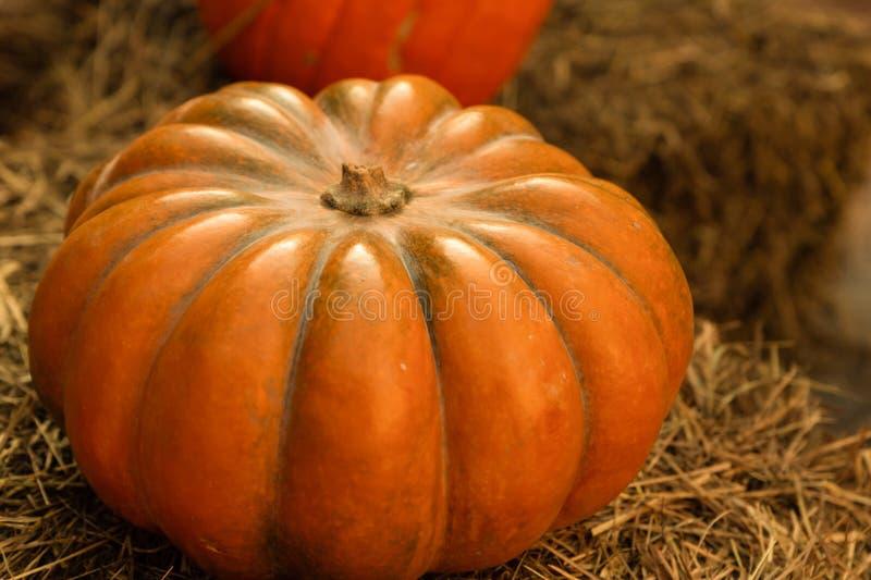 Goût mûr, citrouille orange gros potiron légumes côtes automne saisonnier sur base naturelle photographie stock