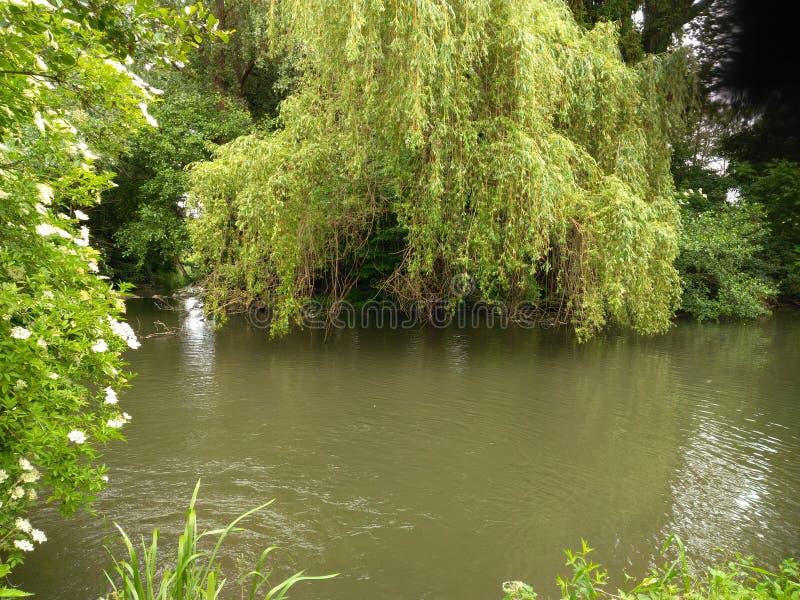 Goûtez la beauté sauvage du panorama d'une rivière en été en Alsace images stock