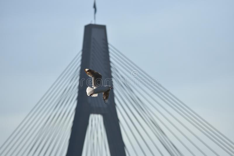 Gołąb lata nad nadużytym mostem obraz stock
