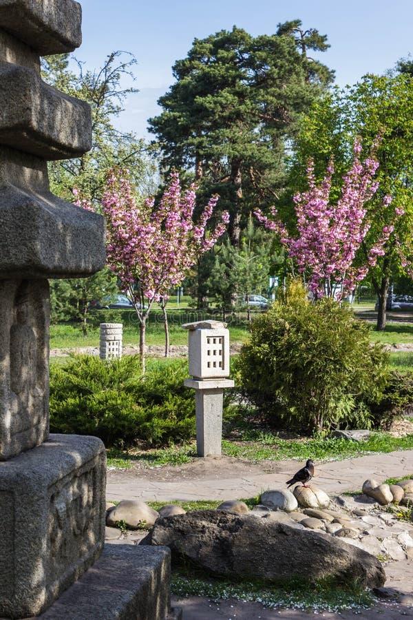 Gołąb siedzi na kamieniu w tle park i Sakura obrazy royalty free