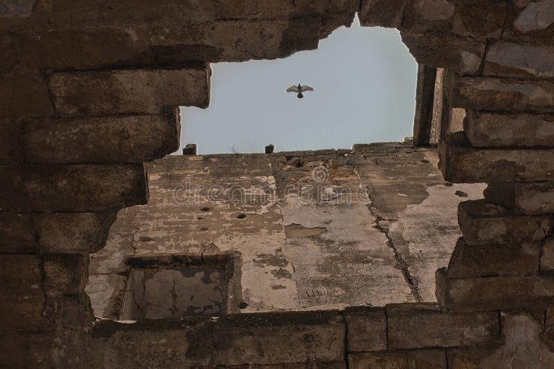 Gołąb unosi się w niebie nad ruiny obrazy royalty free
