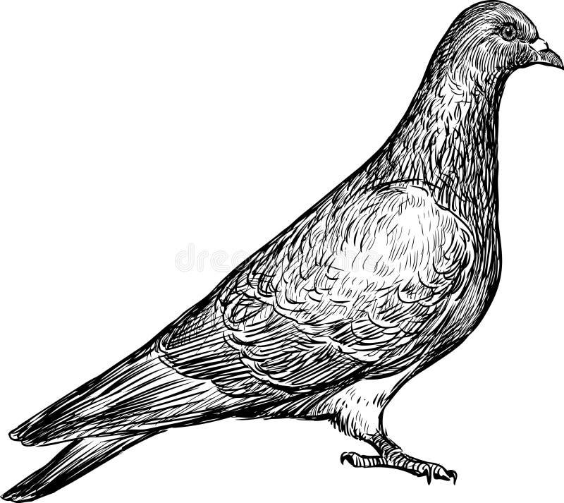 Gołąbka royalty ilustracja
