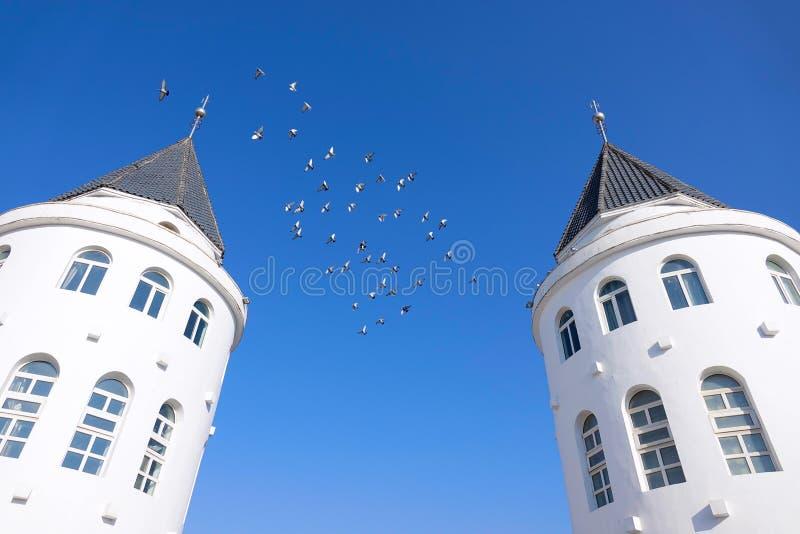 Gołąbka i budynek zdjęcia royalty free