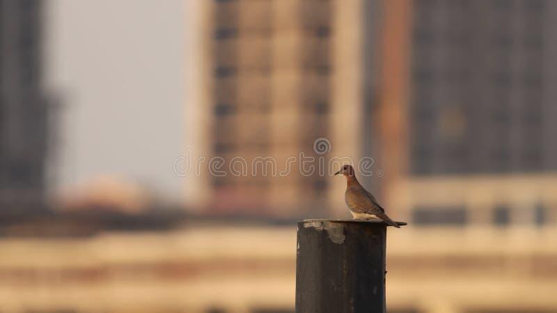 Gołąbka od mój okno fotografia stock