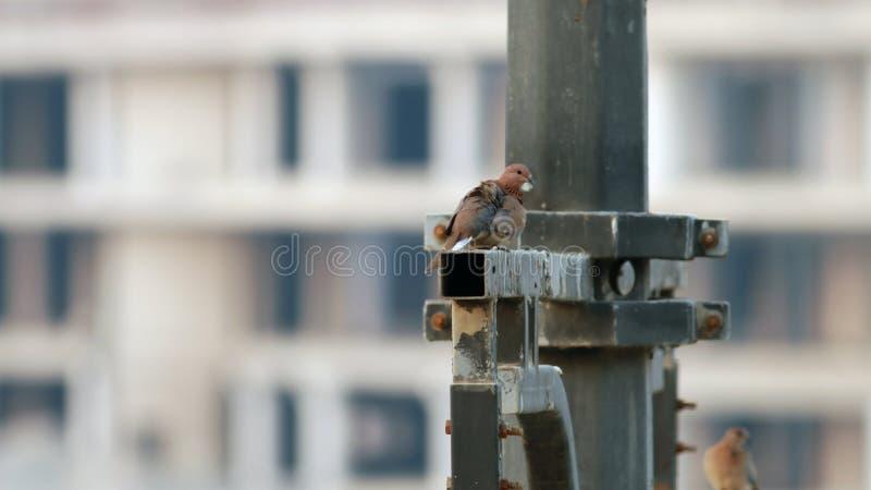 Gołąbka od mój okno fotografia royalty free