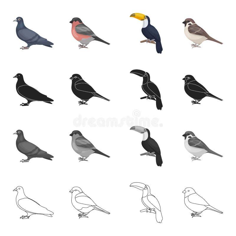 Gołąbka, pieśniowy gil, tropikalny ptak, tukan, mała orbita Ptak ustalone inkasowe ikony w kreskówce czernią monochrom royalty ilustracja