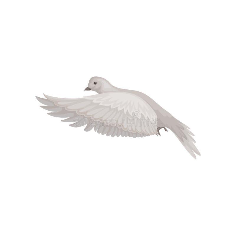 Gołąbka z szarość piórkami w latającej akcji Oferta w powietrzu Faun i ornitologii temat Płaska wektorowa ikona ilustracji