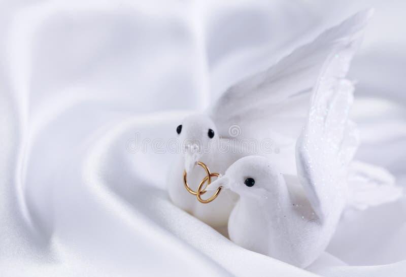 gołąbki biały zdjęcie royalty free