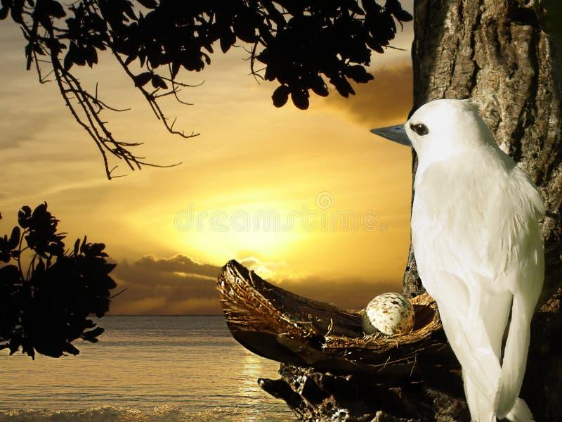 gołąbki jajka gniazdeczka wschód słońca obrazy stock