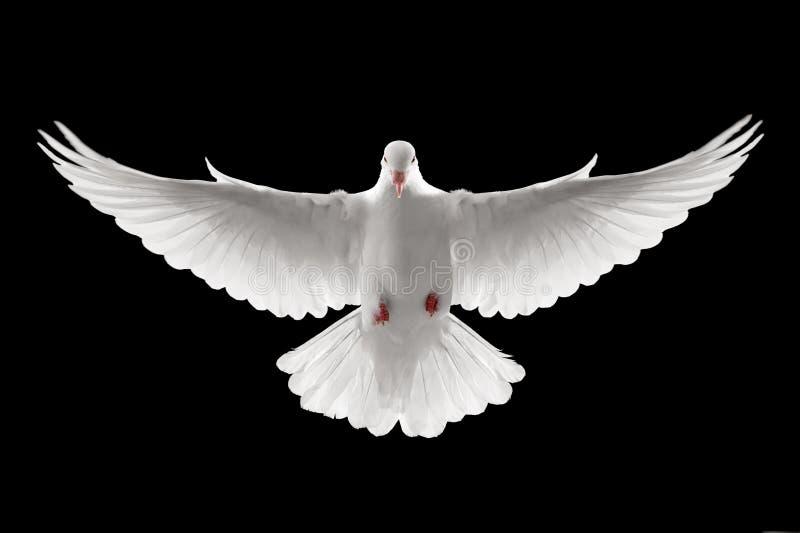 gołąbki latanie zdjęcia stock