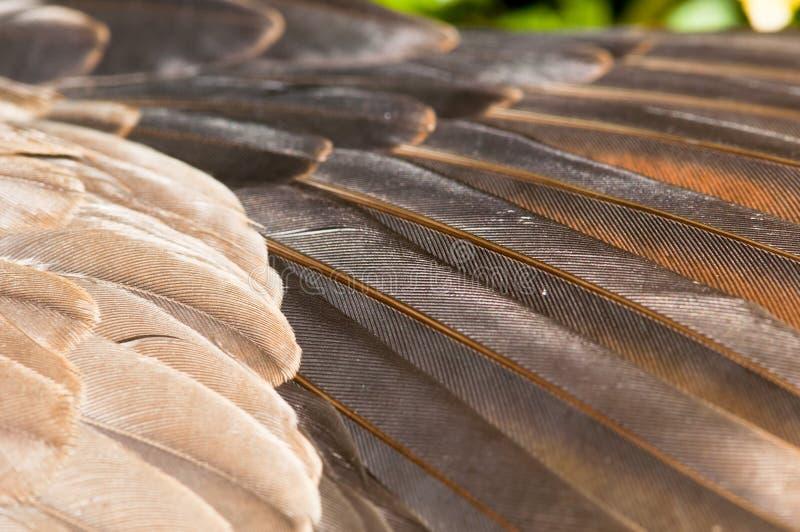 gołąbki skrzydło s obraz stock