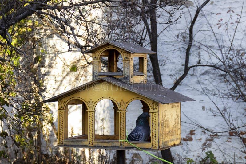 Gołębi obsiadanie w drewnianym ptasim dozowniku zdjęcia royalty free