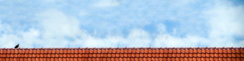 gołębia stojak na dachu i niebieskiego nieba bielu chmurnieje fotografia stock