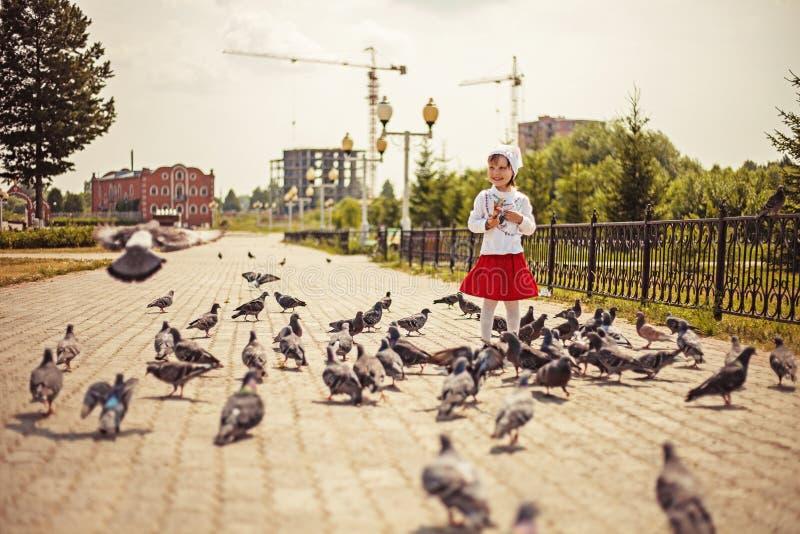 Gołębie. fotografia stock