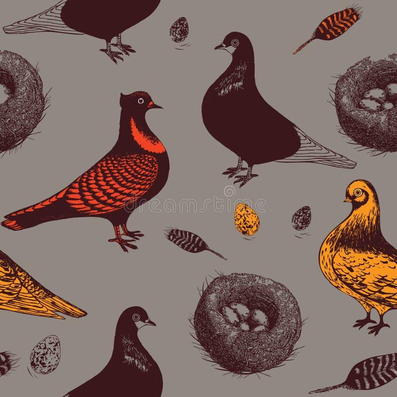 Gołębie i gniazdeczko. ilustracji