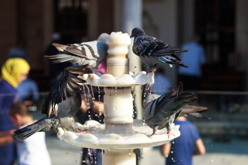Gołębie na fontannie zdjęcie stock