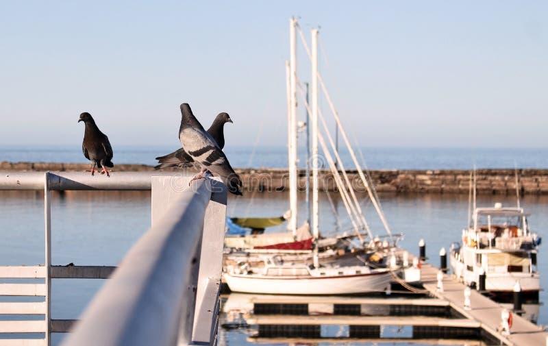 Gołębie na poręczach nad marina zdjęcie stock