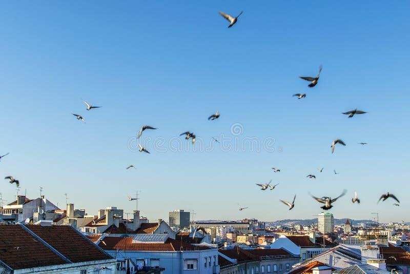 Gołębie nad miastem przy zmierzchem fotografia stock
