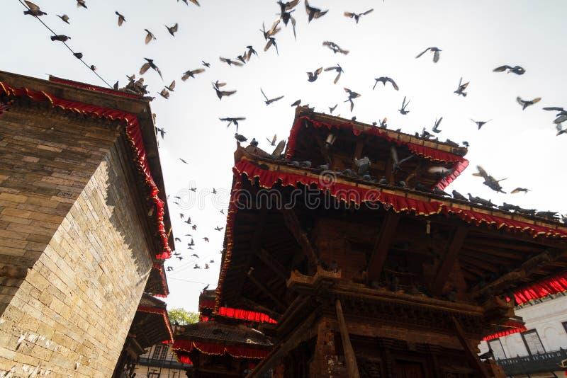 Gołębie przy Durbar kwadratem w Kathmandu, Nepal zdjęcie stock